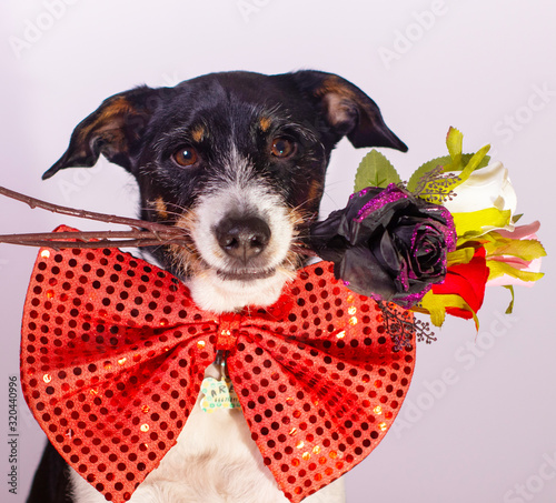 dog with bouquet of flowers to give in valentine Canvas Print