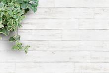 白い背景板と観葉植物...