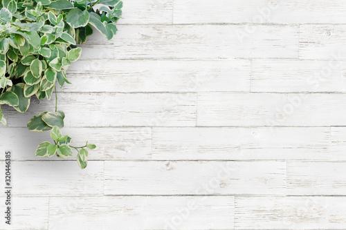 白い背景板と観葉植物・横