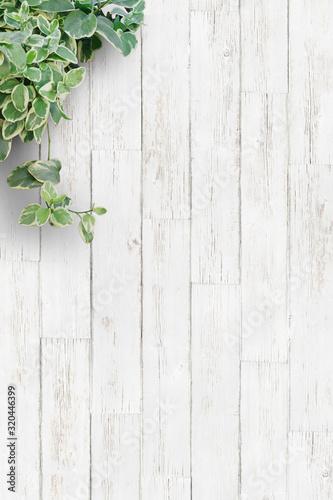 白い背景板と観葉植物・縦 Fototapete