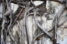 Tree Roots And Branches That A...