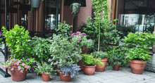 Many Beautiful Potted Plants O...