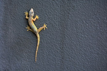 A Lizard On The Wall