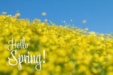 Hello Spring Phrase. Yellow Ra...