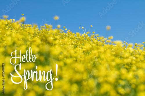 Photo Hello Spring phrase