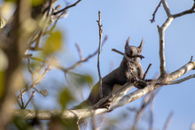 Squirrel Standing On The Tree....