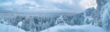 Frosty Day In Snowy Coniferous...