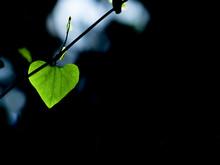 植物の若葉のクローズ...