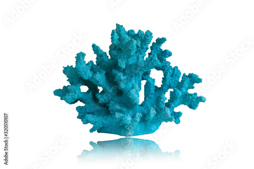 Blue coral isolated on white background.This had clipping path. Canvas Print