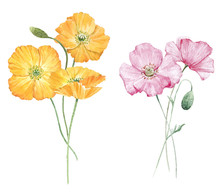 Beautiful Bouquet Composition With Watercolor Yellow Poppy Flowers. Stock Illustration.