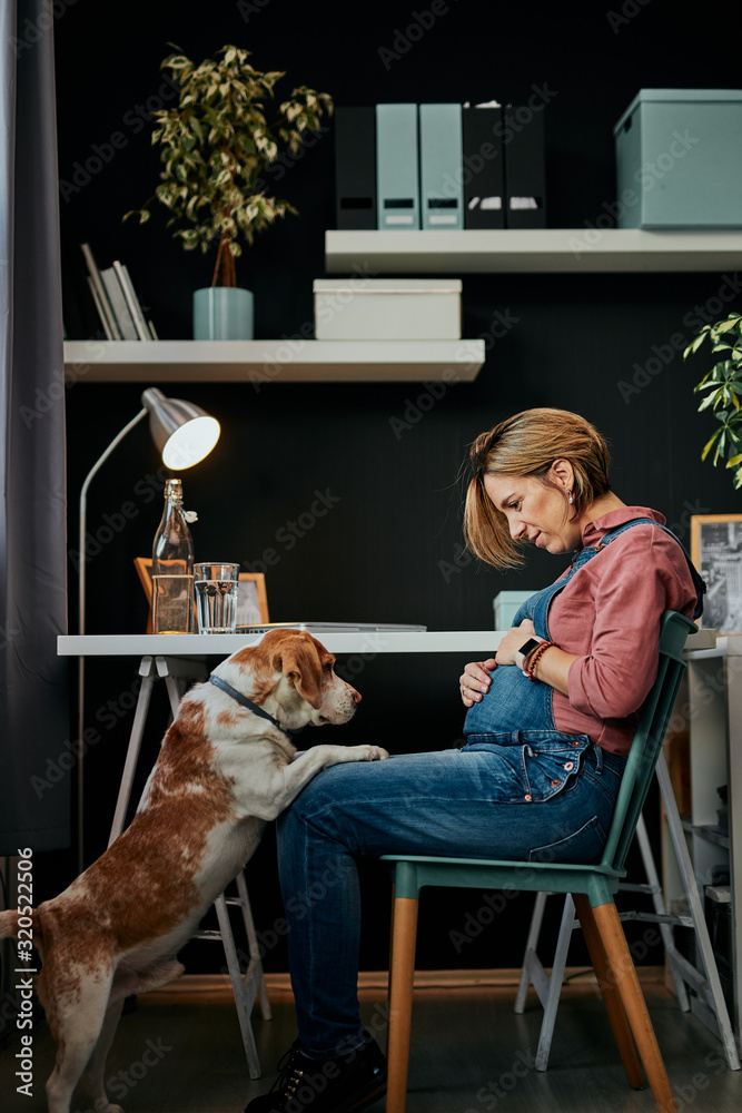 Fototapeta Cute caucasian pregnant woman in forties sitting in home office and playing with her beloved dog.