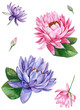 canvas print picture Pink and purple water lily lotus flower, watercolor illustration, isolated on white background