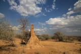 Fototapeta Sawanna - olbrzymie termitiery z dzrwami w tle w afryce w słoneczny dzień