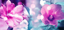 Spring Floral Background In Ul...