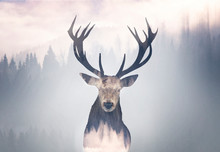 Red Deer And The Misty Forest