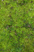 Grass And Moss Ground Texture