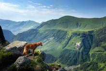 Dog In The Mountains. Nova Sco...