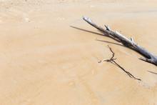 Dry Tree On Sand Beach, Enviro...