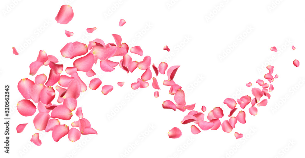 Fototapeta Flying fresh pink rose petals on white background