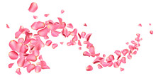 Flying Fresh Pink Rose Petals ...