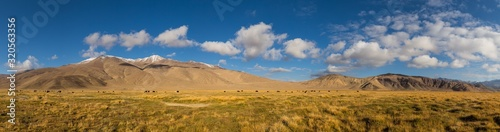 Fotografía Panorama of mountain pastures with wild yakas in the Pamir mountains in Tajikist