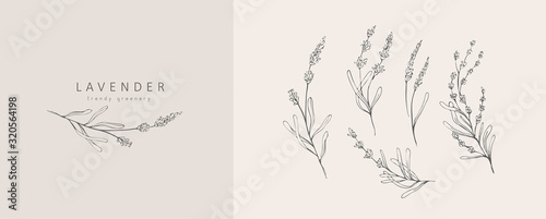 Lavender logo and branch. Hand drawn wedding herb, plant and monogram with elegant leaves for invitation save the date card design. Botanical rustic trendy greenery