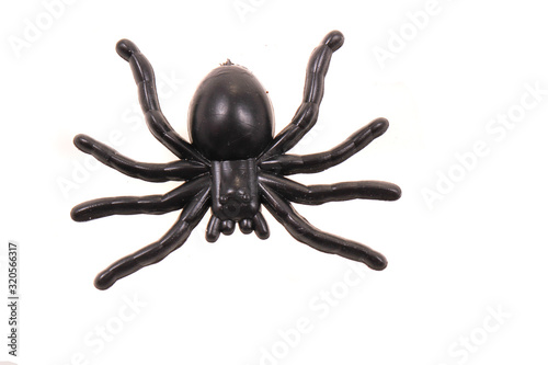 Photo plastic spider isolated