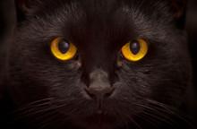 Close-up Portrait Of Black Cat...
