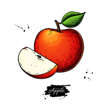Apple Vector Drawing. Hand Drawn Fruit With Leaf And Slice. Summer Food Illustration.