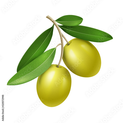 Fototapeta Vector realistic olive branch with two green olives obraz