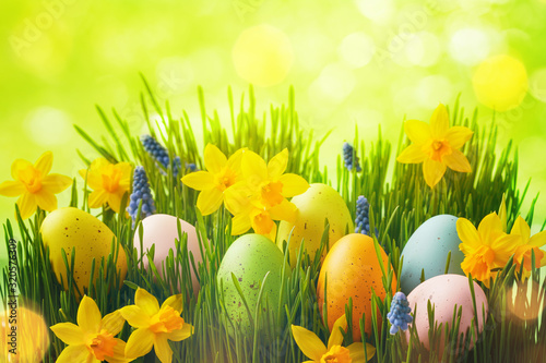 Spring background with Easter eggs in green grass and daffodil flowers Tableau sur Toile