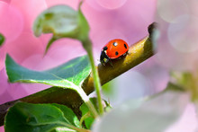 Bright Little Ladybug Among Th...