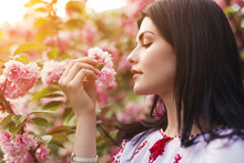 Young Woman Smelling Sakura Fl...