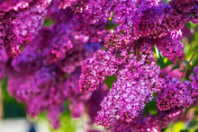 Dazzling Floral Background Of ...