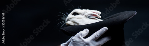 panoramic shot of magician in gloves showing trick with white rabbit in hat, iso Canvas Print