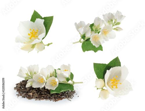 jasmine isolated on white background Tableau sur Toile
