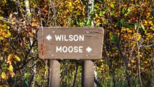 Wilson Moose Road Crossing Sign Grand Teton National Park