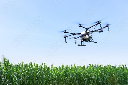 Fototapeta Smart farm use drone flying  spray on blue sky in the corn fields obraz