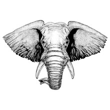 Elephant. Wild Animal For Tattoo, Nursery Poster, Children Tee, Clothing, Posters, Emblem, Badge, Logo, Patch