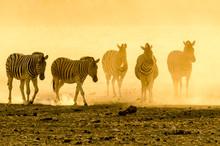 Namibian Zebras At Sunset In T...