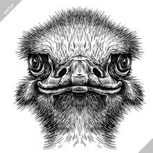 Black And White Engrave Isolated Ostrich Vector Illustration