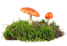 Fly Agaric Mushrooms On Green ...