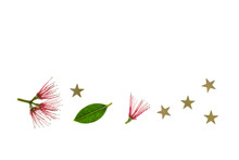 Red Pohutukawa Tree Flowers Wi...