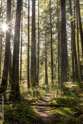 sun breaking through in the forest