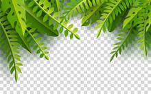 Palm Leaves On Transparent Bac...