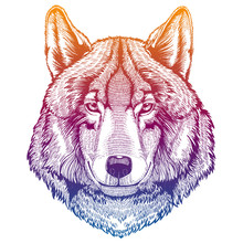 Wild Wolf. Animal Head. Portra...