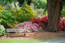 Inviting Bench Surrounded By Colorful Azalea And Rhododendron Bushes