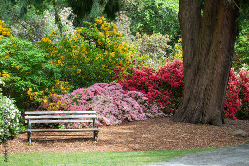 Obraz na plátně Inviting Bench Surrounded By Colorful Azalea and Rhododendron Bushes