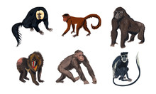 Funny Monkey Animals With Long Tales Vector Illustration