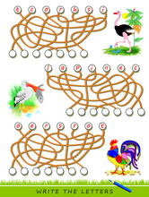Logic Puzzle Game For Study English With Maze. Find Correct Places And Write The Letters. Read The Words. Learn Names Of Birds. Printable Worksheet For Kids Textbook. Back To School. Vector Image.